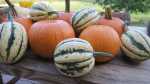 New England Pie Pumpkins and Acorn Squash