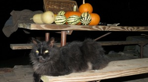 Boo with pumpkins