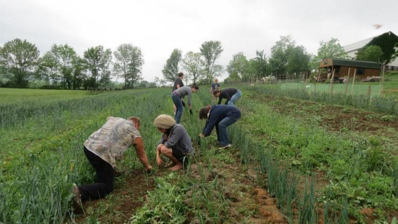 Community Farm Day 2013