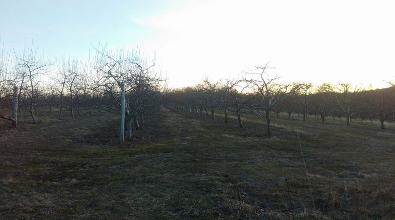 orchard-photo